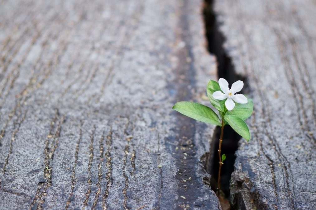 Planning for spiritual growth