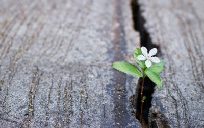 Personal plan for spiritual growth